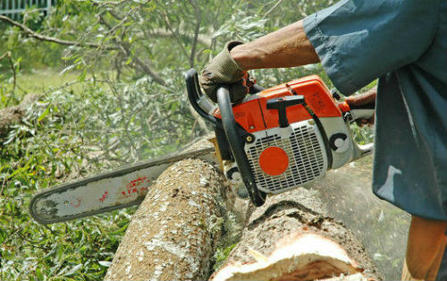 tree-cutting-chainsaw-sl